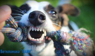 здоровые зубы собаки